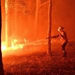 Már 480 millió állat pusztult el az ausztrál bozóttüzekben
