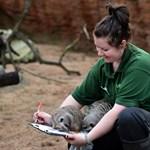Fotók: állati népszámlálás Londonban