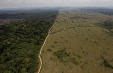 Még soha nem vágtak ki annyi fát Brazíliában, mint idén