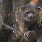 Cuki új emlőst fedeztek fel – fotók