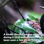 Új madárfajt neveztek el a biodiverzitás szó kitalálójáról