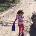 A kislányt iskolába kísérő elárvult kölyök orrszarvú a nap cuki látványa – videó