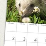 Így nyomtathatunk saját fotóval ellátott naptárakat, ingyen és egyszerűen!