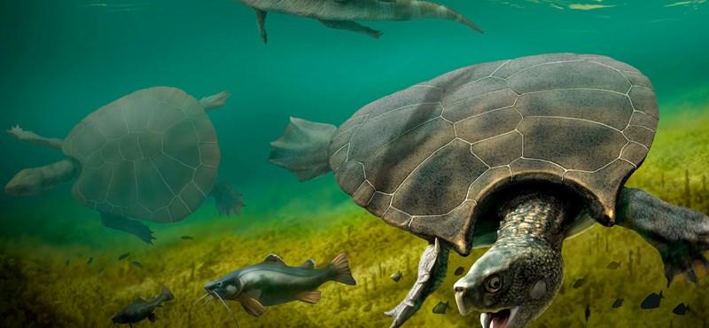 3 méteres teknőspáncélt találtak – fotó