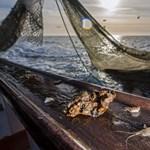 Egy kiló garnélarák miatt hat kiló más tengeri élőlény pusztul el
