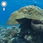 120 millió dollárt követel Ausztrália a korallzátonnyal karambolozó hajótól