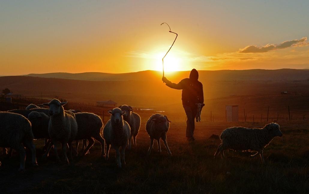 Dél-Afrika, Qunu: pásztorfiú Nelson Mandela szülőfalujának határában. - hét képei