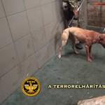 Mohácsi vágóhídon tartottak kutyaviadalt – videó