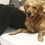 Hasznos felfedezés: a kutyák nem tudják, hogy a szavak minden hangja számít