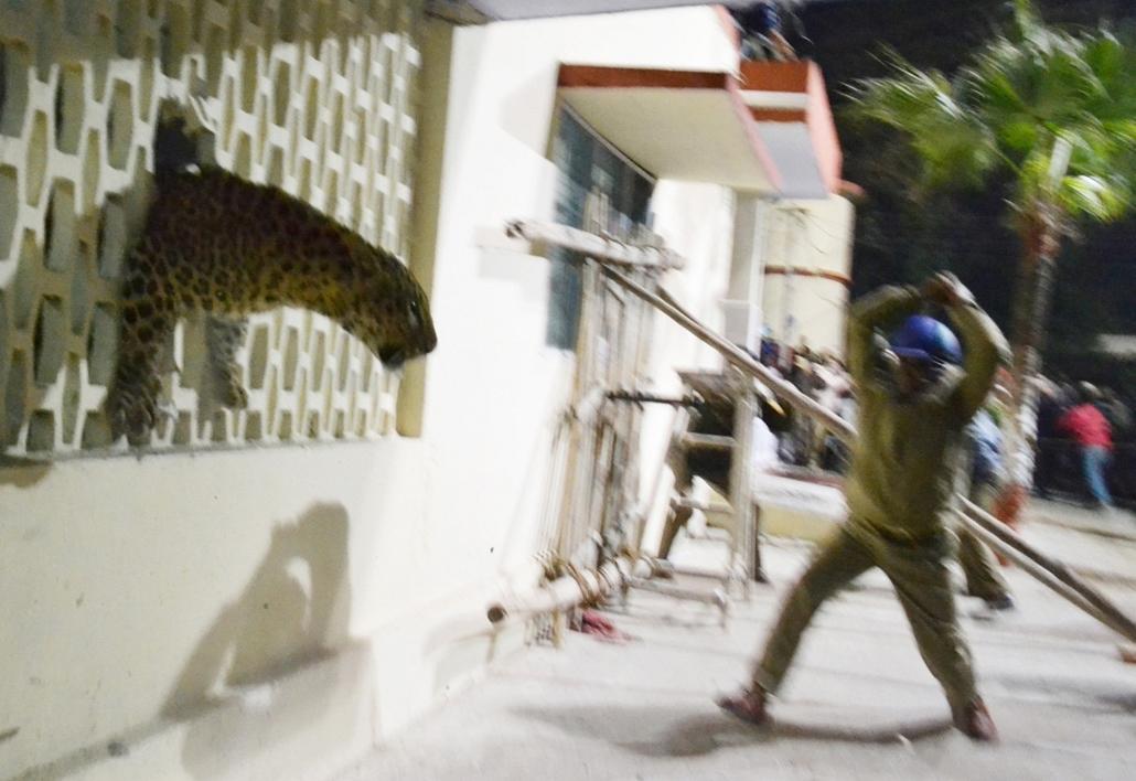 afp.14.02.23. - Meerut, India: a közeli vadonból elkóborolt leopárd tartotta rettegésben a város lakóit. A pánik okozta tülekedésekben többen megsérültek, , - a hét képei