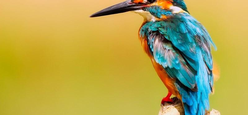 Biológiai kvíz: mit tudtok az állatokról?