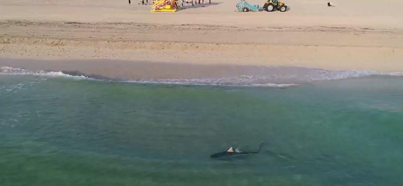 Cápa harapott lábon két gyereket New York partjainál