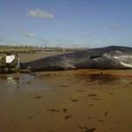 Fotó: ámbráscetet vetett partra a víz Angliában