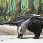 Kitömött állat volt a képén, megbüntették az év egyik legjobb természetfotósát