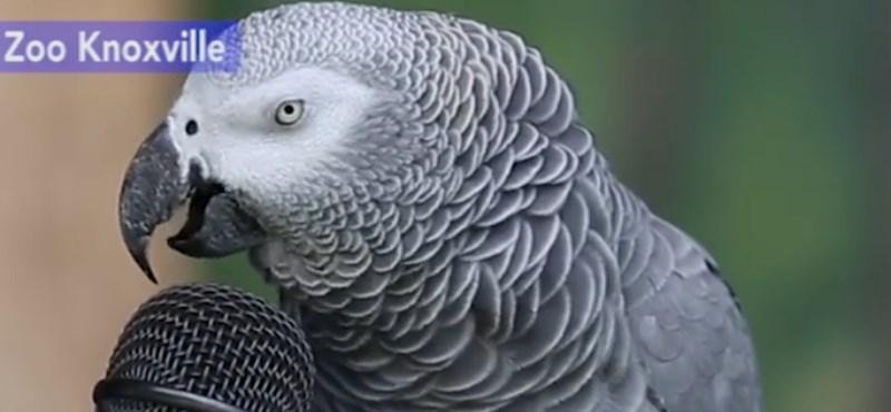 Interjút adott Einstein, a 30 éves papagáj