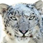 Kipróbáltuk: OS X Snow Leopard - Ismét leopárdot nyúztunk