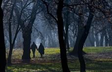 Pénzt hoznak a városi fák