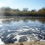Hatósági engedéllyel szennyezik a szegedi Tisza-holtágat
