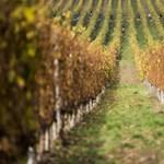Nem csak az idei bor java van oda Tokajban
