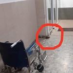 Patkány szaladgált a berettyóújfalui kórház folyosóján