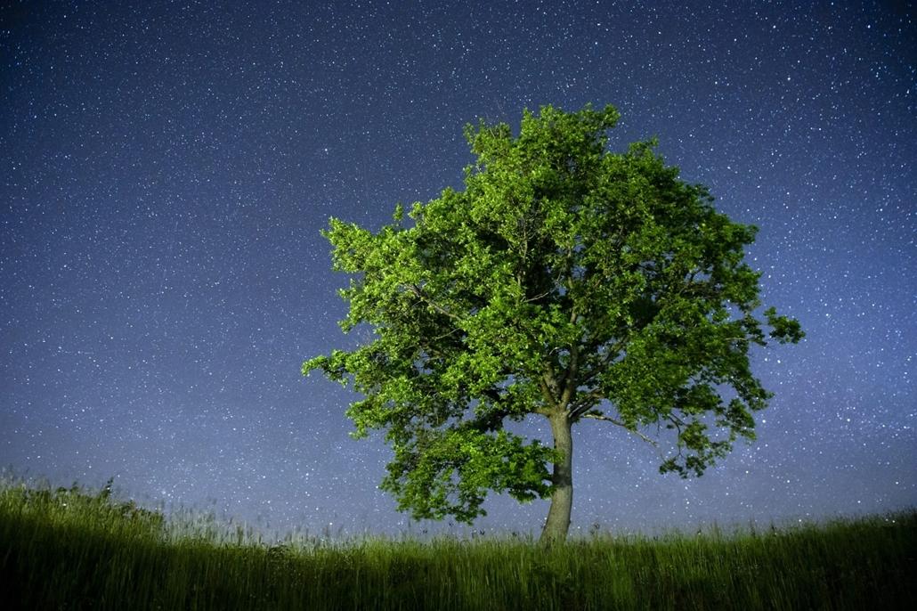 Madarak és fák napja, Salgótarján, 2013. május 9. Meteorit a légkörben egy vadkörtefa (Pyrus pyraster) mellett Salgótarján közelében 2013. május 8-án. Május 10. madarak és fák napja.