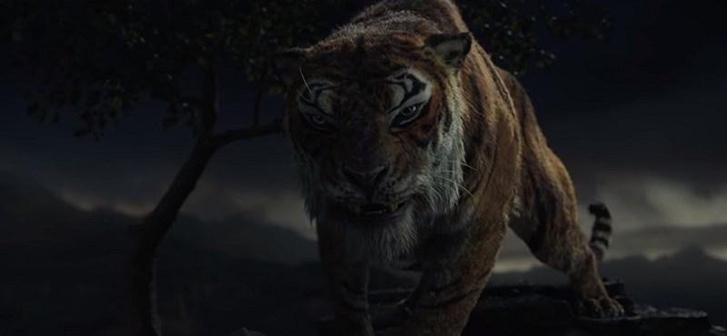 Ez a tigris eléri, hogy neki drukkoljunk, ne Mauglinak