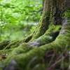 Hamarabb veszíthetik el leveleiket a fák ősszel a globális felmelegedés miatt