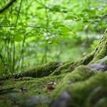 Lombkoronájuk több mint hatodát elvesztették az európai erdők 1986 óta