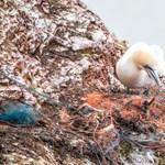 Indul a nagy szemétgyűjtő projekt: elkezdik kihalászni a rengeteg műanyagot a Csendes-óceánból