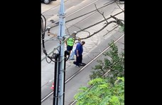 Ha nem látja, nem hiszi el: lábbal aszfaltoztak le egy úthibát Budapesten – videó