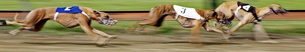 Agárverseny - Nagyítás képgaléria
