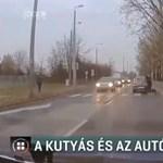 Botot hajítottak egy kocsi után, mert nem állt meg a zebránál, és majdnem kutyát gázolt – videó