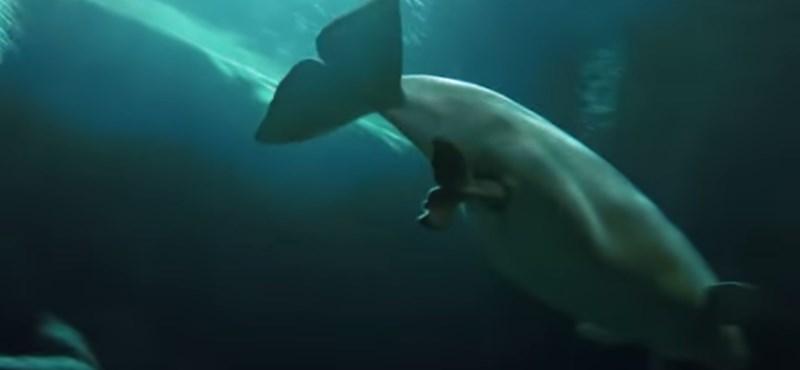Videó: 57 kilós bébit szült a mosolygós bálna