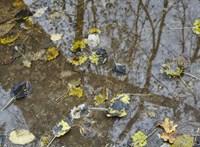 10 fok is lehet jövő héten, de jön az ónos eső