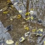 Esős, változékony idővel fordulunk be november közepére