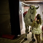 Elefántkatapult a Budapesti Cirkuszfesztiválon – Nagyítás-fotógaléria