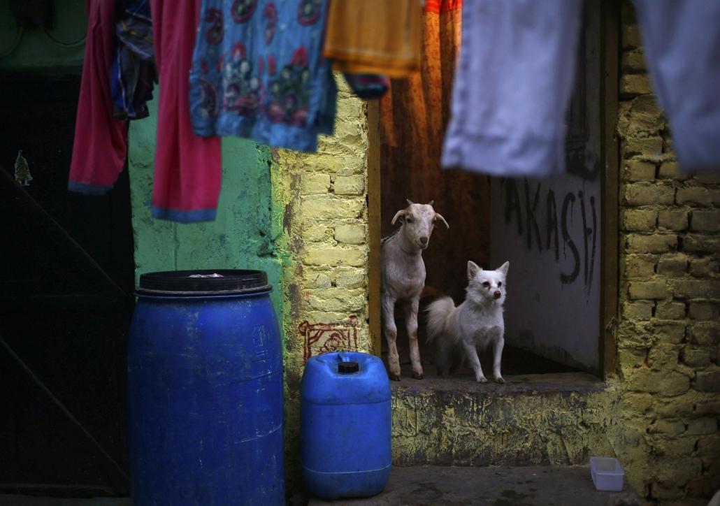 AP!  Indiai életkép - Újdelhi, 2014.01.30.