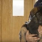 Megvan a terroristák által lelőtt Diesel kutya utódja - fotó, videó