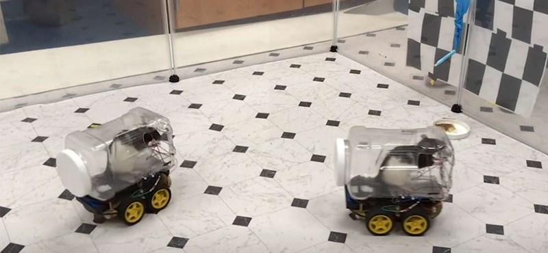 Megtanították a patkányokat vezetni, és ez fontosabb, mint elsőre gondolná