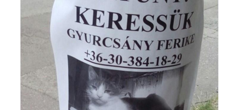 Eltűnt: múlt péntek óta Óbudán portyázik Gyurcsány Ferike