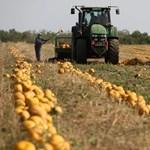 A vidék romantikája: ismét elindul a gazdák társkeresője az RTL Klubon