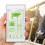 Szenzorokkal még a tehenek is boldogabbak (videó)
