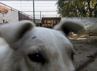 100 millióból ivartalanítja a kóbor kutyákat a kormány