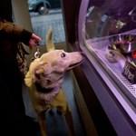 Fotó: kutyamennyország a házi kedvencek delikát boltja