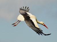 104 milliót költöttek a gólyák és denevérek védelmére a Balaton-felvidéken