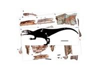 9 méter hosszú, 3,5 tonnás, cápafogú dinoszaurusz maradványait találták meg
