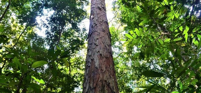 La deforestación de la selva amazónica en Brasil continúa a tasas récord