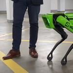 Megsimogattuk Alízt, a Budapestre érkezett 22 millió forintos robotkutyát