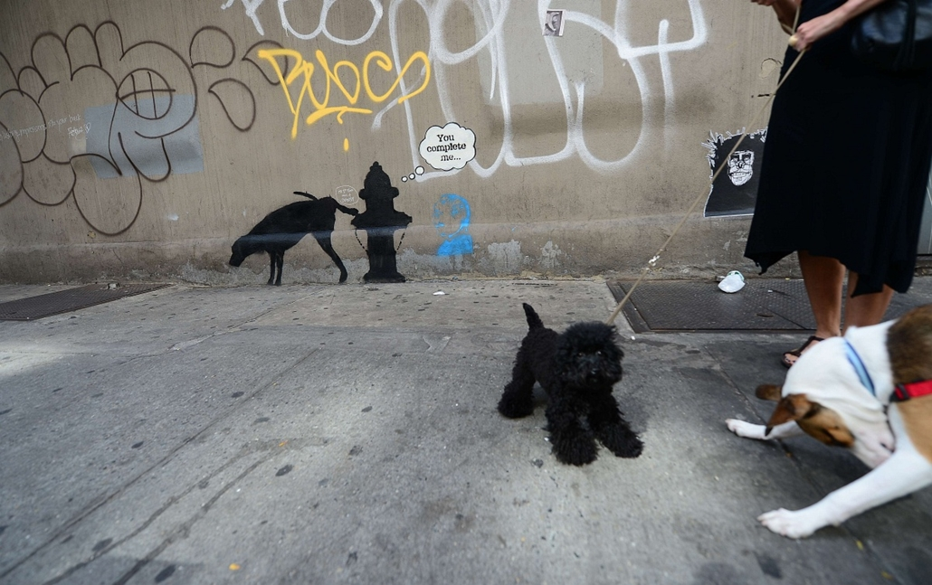 """a hét képe nagyítás-fotógaléria kép - Two dogs play in front of a street art graffiti by elusive British artist Banksy, as part of his month-long """"Better Out Than In"""" exhibit, in New York, October 3, 2013. Banksy will be attempting to host an entire show"""