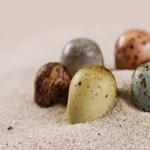 Ez aranyos: színes, foltos és pettyes tojása volt néhány dinoszaurusznak